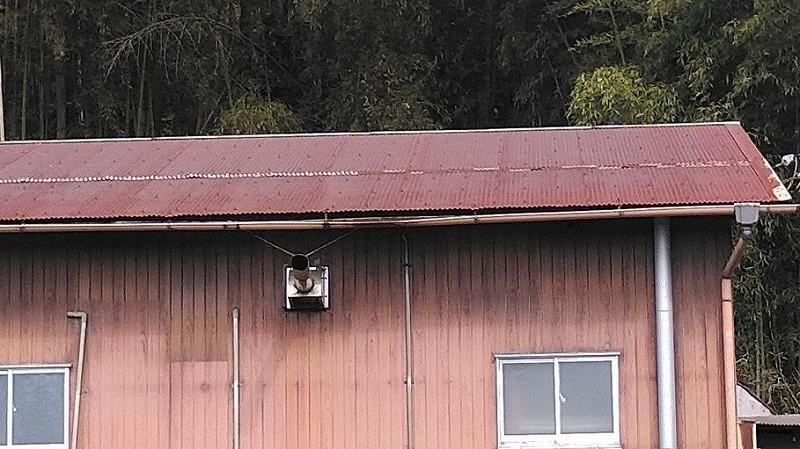 作業小屋の南東の雨樋の垂れ下がり