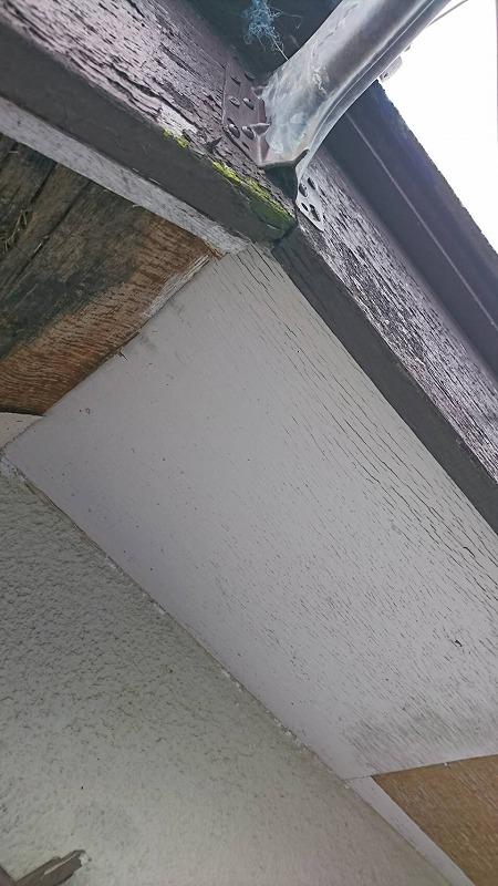 傷んだ軒天井破風板にも苔