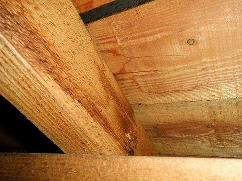 垂木と野地板の雨漏りのシミ