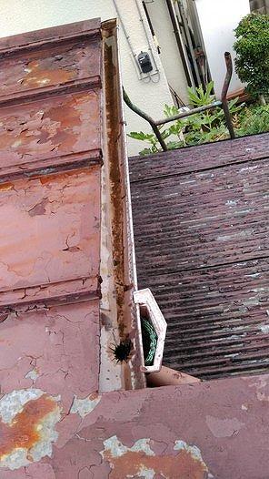 雨樋の奥に雨水がたまっている