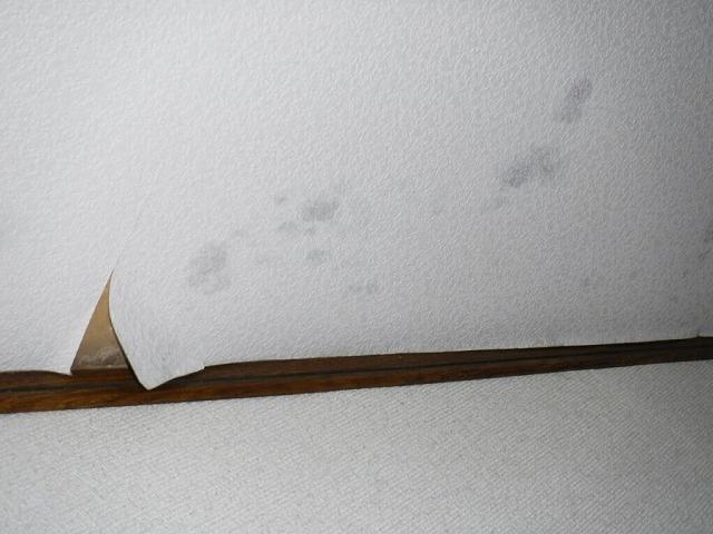 玄関天井の雨漏りによるクロスの剥がれ