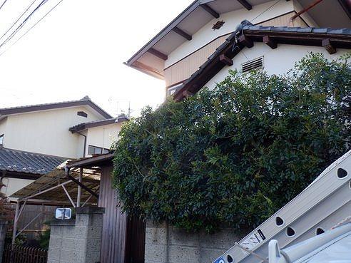 高崎市で塗装が傷んで板金に穴の開いたトタン屋根を調査しました