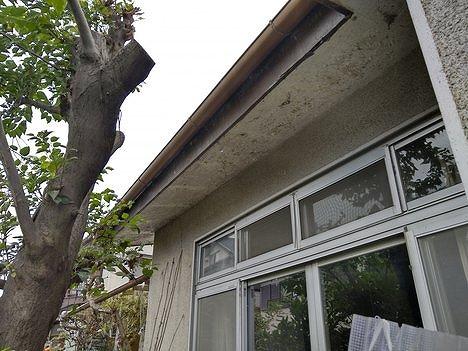 塗装の膜がボロボロの軒天井