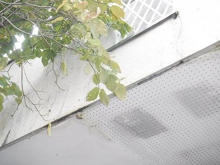 ベランダの裏の軒天井の傷み