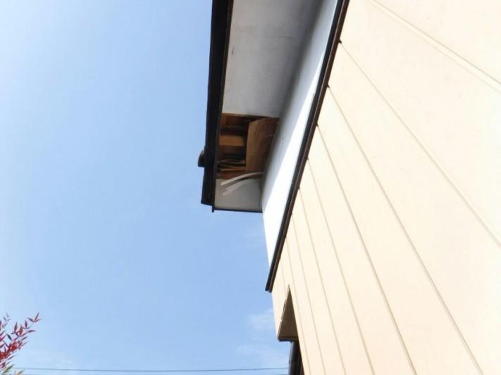 下から見た軒天井の剝がれたところ