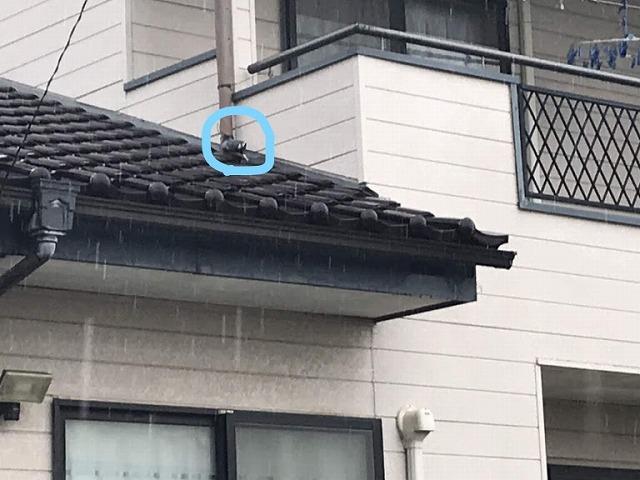 台風により雨樋のエルボから先が取れてしまっているところ