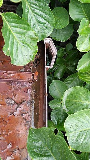 集水器に葉っぱ詰まり
